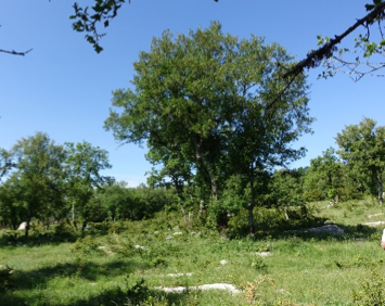 Newly created wood pasture. Credit Niels Corfield